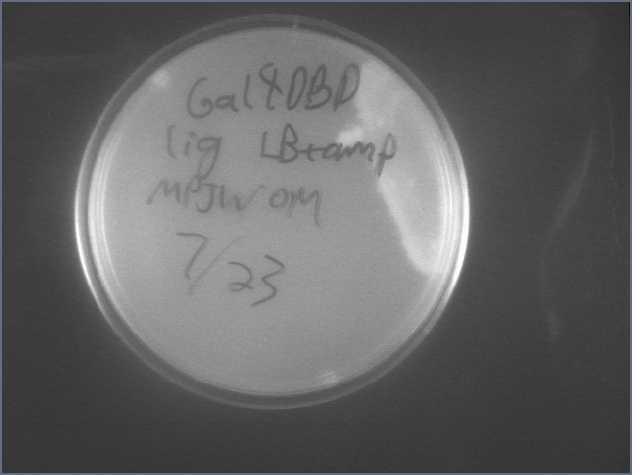 File:Gal4DBD Lig 7-23.jpg