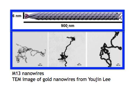 Au nanowires credit blue.png