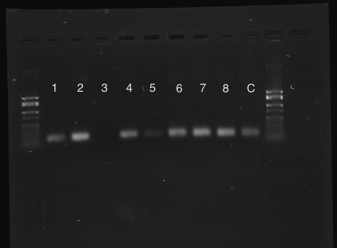 File:MLZ extractions Rnd2 Rho.jpg