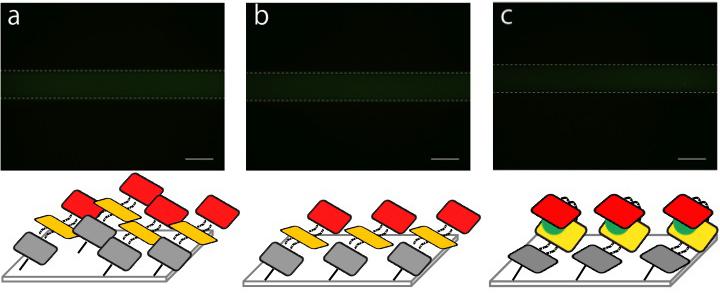 File:Biomod-2012-UTokyo-UT-Hongo Fixing on microfluidics (image-1) ver5.jpg
