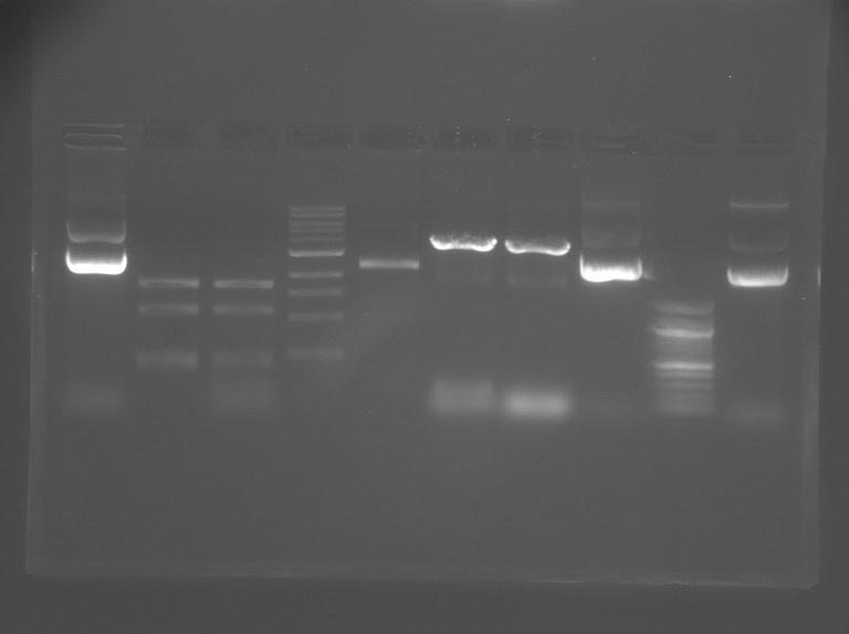 File:S12 M2D5 WF gel-Blue.jpg