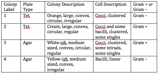 Image:Cell morphology table.png