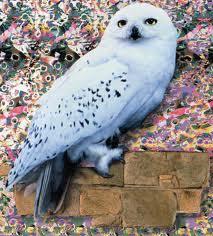 File:Hedwig.jpeg