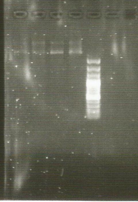 E coli plasmid DNA.jpg