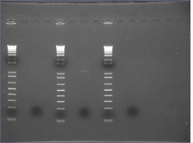 PCR 317.jpg