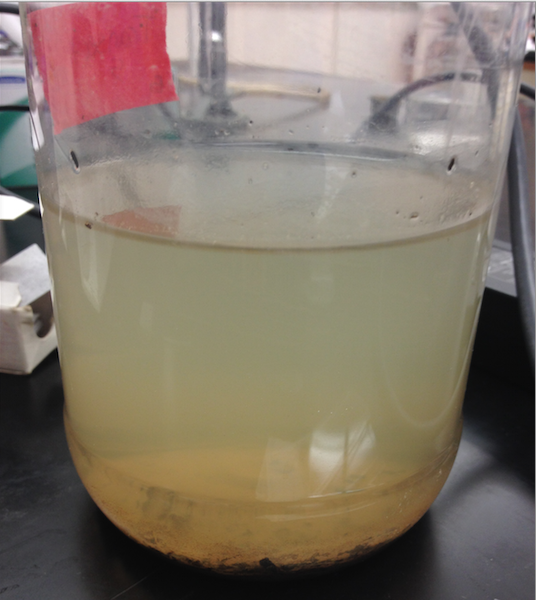 Image of Hay Infusion Culture