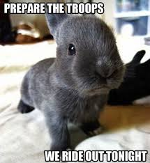 File:Bunny picture.jpg