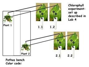 ChloroSetUpSH12.jpg