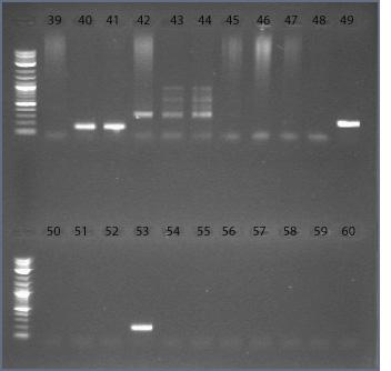 File:14dec09 pimer25-30 39-60 text.jpg