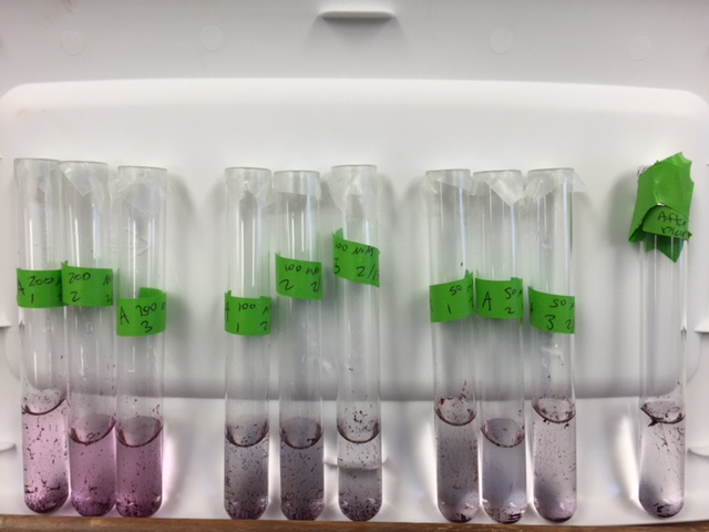 File:20160224 20160217samples after adding rhodamine 200 100 50 blank.JPG