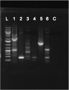 File:PCR7-21-15.jpg
