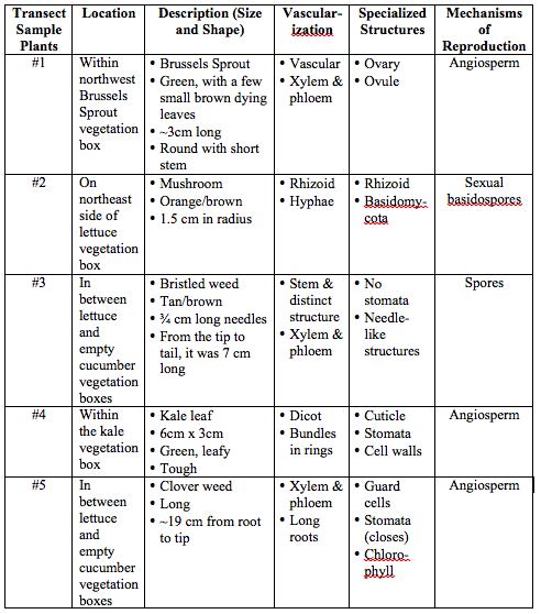 Image:Descriptive Table about Plantae and Fungi.png