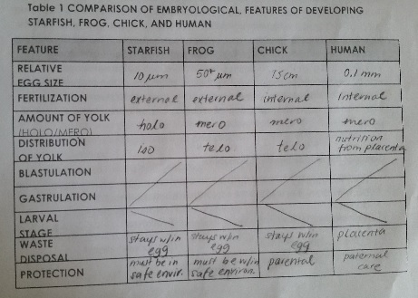 File:Embryodevcomp.jpg
