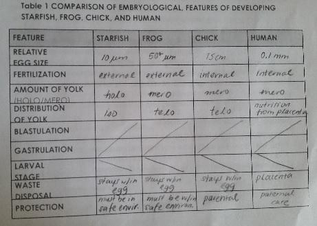 Embryodevcomp.jpg