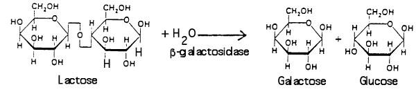 Lactose bgal image.jpg
