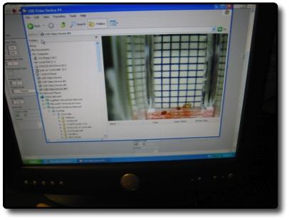 File:AM Tobacco Seeds-Cuvette software.jpg