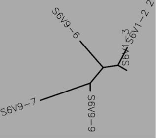 File:Tree S6 protein.png