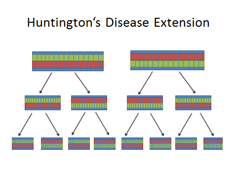 Image:Huntington's Extension DNA.jpg