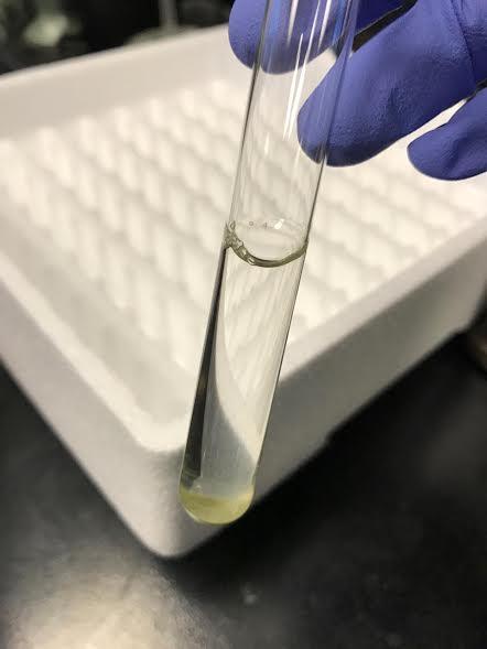 File:AgNO3 0mM Fructose pH9.jpg