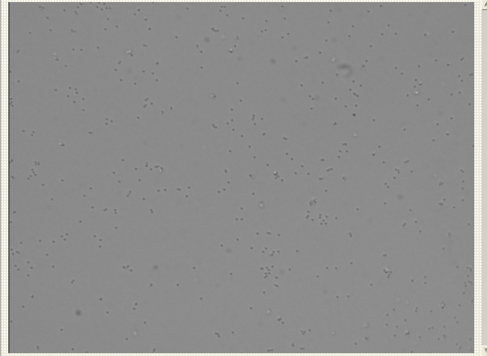 File:Halfmicron bead sonicated.png