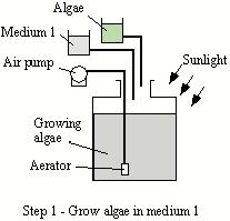 Hydrogen bioreactor schematic 1.JPG