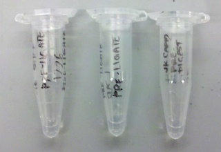Eppendorf tubes that contain the liquids after digestion of part pBca9525-sbb1223 (left) and part pBca9525-sbb1204 (middle), and after regular zymo cleanup of the second copy of part pBca9525-sbb1223 (right) after the second step of PCA amplification.