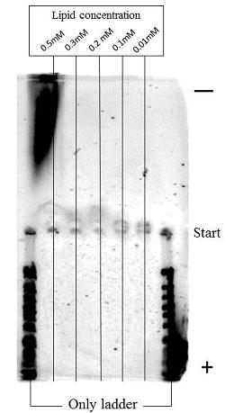 File:Lipid+ladder format.jpg