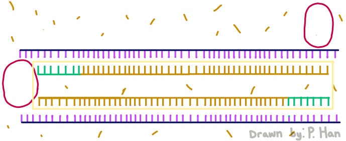 PCRRG125.png