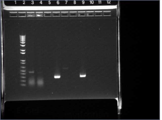File:WS PT Gel 3-2-07.jpg
