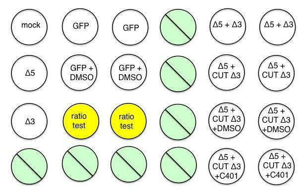 File:F13 M1D6-layout.jpg