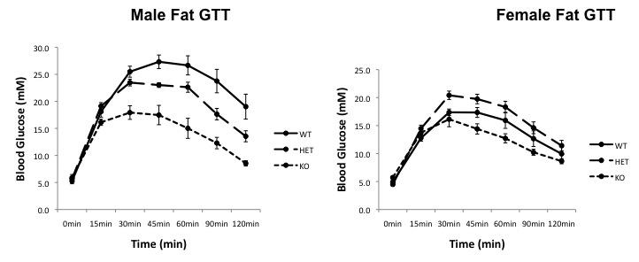 File:Fat GTT curves.jpg