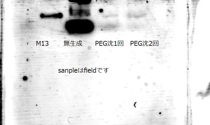 File:PEG沈.JPG