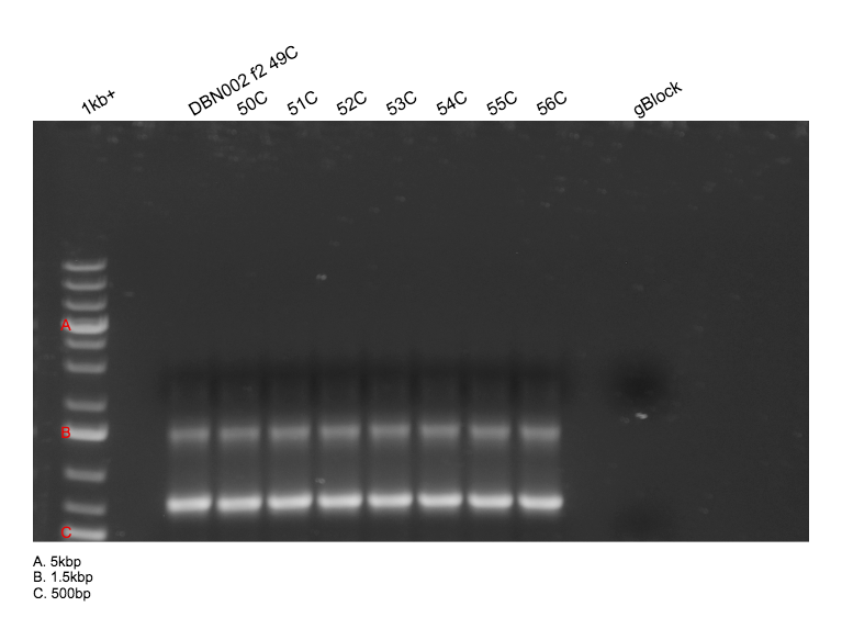 File:2015-04-03 PCR products part 1 annotated.png