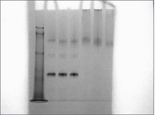 File:Cst725morningprotein.jpg