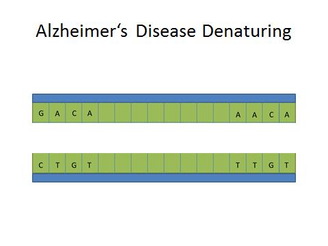 Alzheimer's Denaturing DNA.jpg