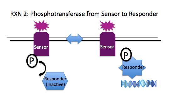 File:Rxn2 phosphotransferase.png
