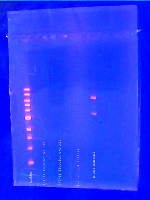 Image: Analytical mini-gel 7-21-11 copy.jpg