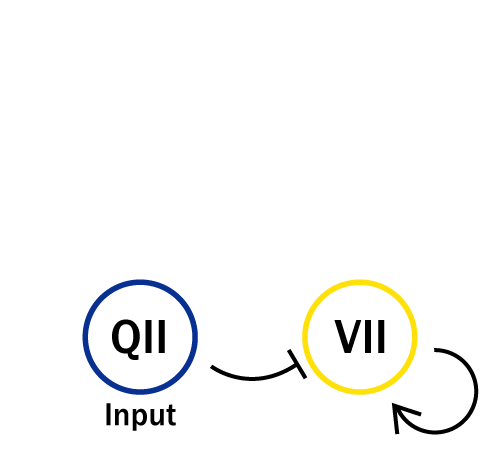 The Concept of the Experiment of VII