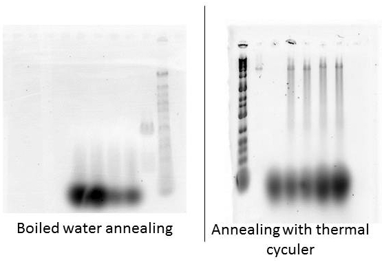 boiled water annealing
