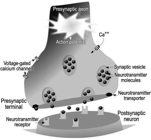 File:ActionPotential.png