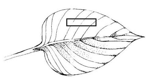 File:LeafSectionDiagram.jpg
