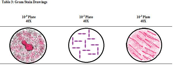 File:Table3AE.jpg