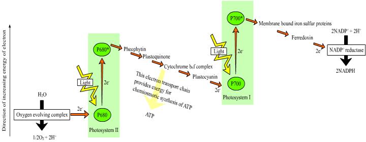 photsynthesis experiment