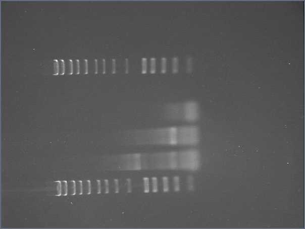 File:Copy of micro3 2008-07-21 biobrick ligation.jpg