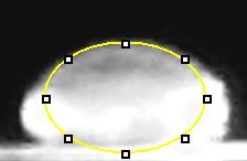 File:5.0 calf thymus.jpg