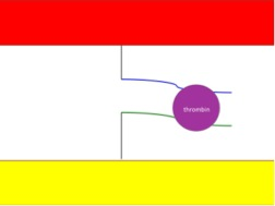 File:Biomod-2012-UTokyo-UT-Hongo-FutureWorkcapturethrombin.jpg