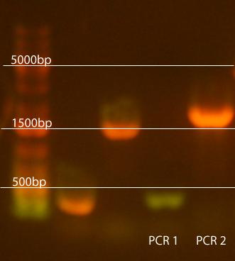 PCR1.jpg