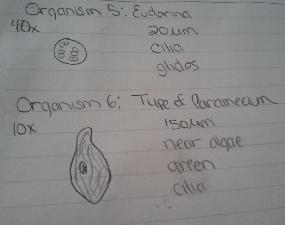 Organisms 5, 6.png