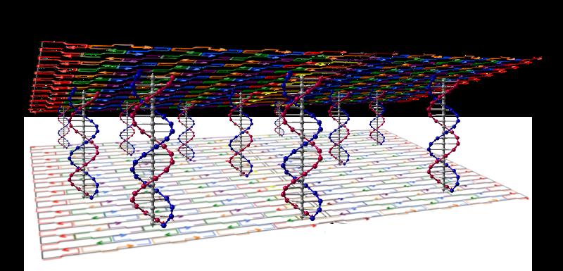 File:VerticalstackDNAtethers.png