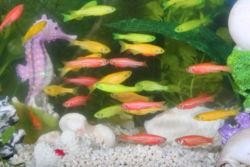 File:250px-GloFish.jpg
